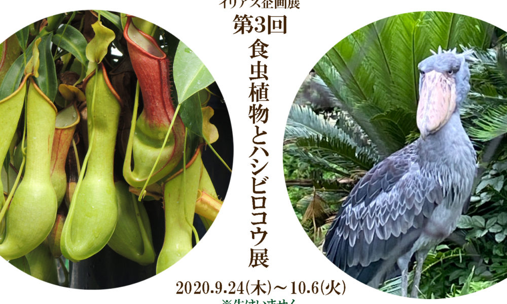 「第3回食虫植物とハシビロコウ展」